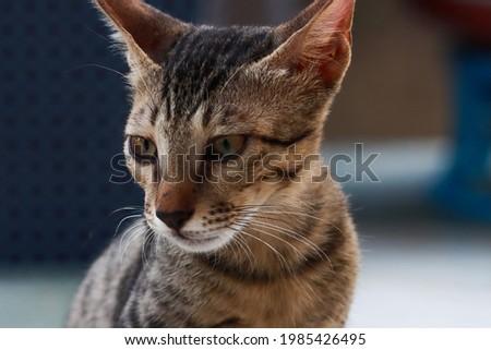 India, 24 May, 2021 : Closeup of cute kitten. Kitten background. Adorable cat. Beautiful cat.