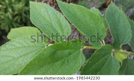 a green leaf close up Royalty-Free Stock Photo #1985442230
