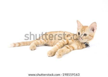 Red little cat on the white background. #198559163