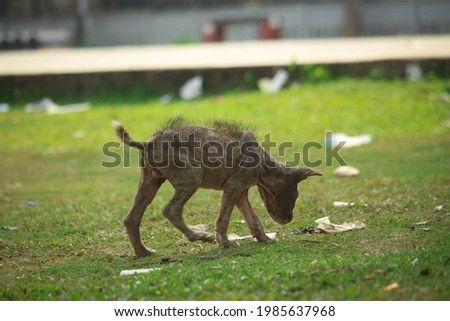 Puppies affected by skin diseases and small puppies are in search of food.