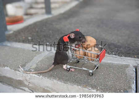 The rat was leaning on a cart of walnuts from the supermarket. I go to the supermarket to buy