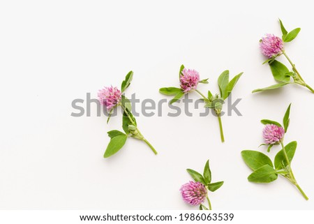 clover flowers on white background, wild clover, blooming clover  Royalty-Free Stock Photo #1986063539