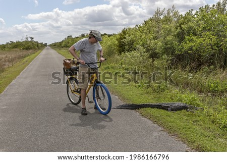 Biker looking at the alligator on the trail. Alligator crossing the road in Florida, USA Royalty-Free Stock Photo #1986166796