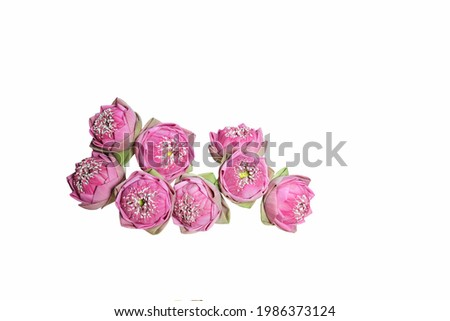 picture of lotus flowers on a white background