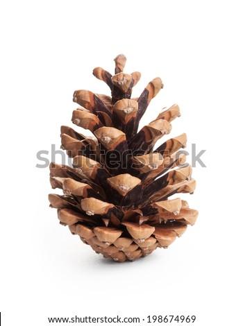 pinecone on white background Royalty-Free Stock Photo #198674969