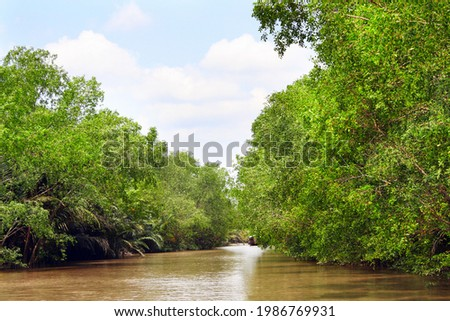 Mangrove trees and palm leaves in delta of Mekong river, Vietnam, Asia