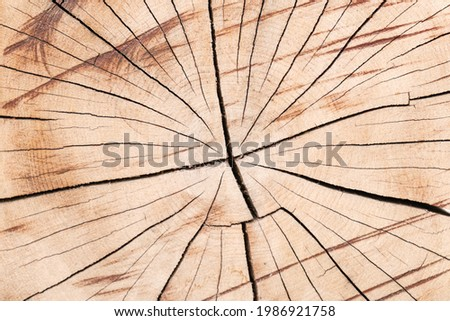 Tree trunk texture. Cross-cut of a tree trunk with cracks due to improper drying of the wood. Close-up of a log sawn across. Royalty-Free Stock Photo #1986921758