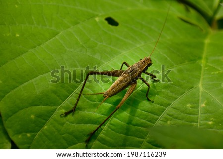 picture of beautiful grasshopper sitting on leaf.