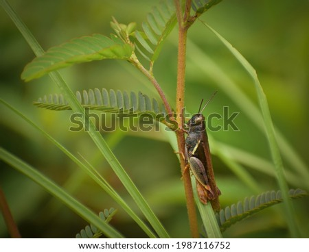 picture of beautiful grasshopper sitting on plant.