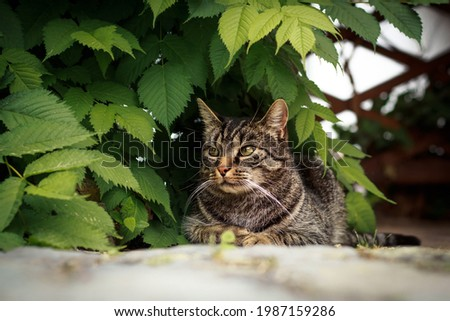 The cat sits under a plant and looking curiously to the side and watched. Portrait of a gray-brown tabby cat. Royalty-Free Stock Photo #1987159286