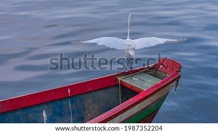 Egret is a bird of the order Pelecaniformes and can be found throughout Brazil. Royalty-Free Stock Photo #1987352204