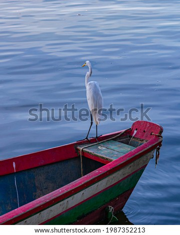 Egret is a bird of the order Pelecaniformes and can be found throughout Brazil. Royalty-Free Stock Photo #1987352213