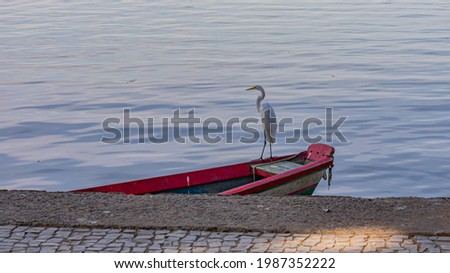 Egret is a bird of the order Pelecaniformes and can be found throughout Brazil. Royalty-Free Stock Photo #1987352222