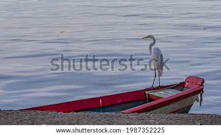 Egret is a bird of the order Pelecaniformes and can be found throughout Brazil. Royalty-Free Stock Photo #1987352225