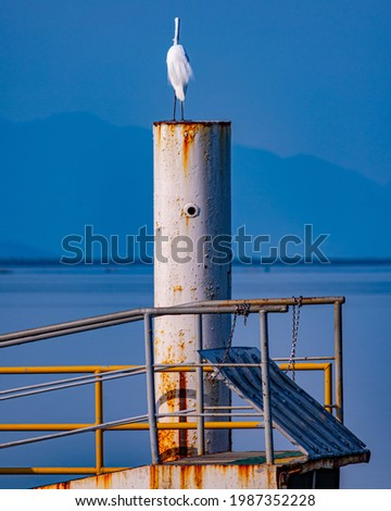 Egret is a bird of the order Pelecaniformes and can be found throughout Brazil. Royalty-Free Stock Photo #1987352228