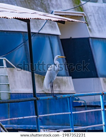 Egret is a bird of the order Pelecaniformes and can be found throughout Brazil. Royalty-Free Stock Photo #1987352231