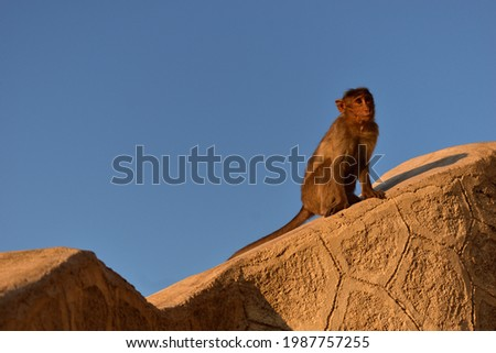 The candid pictures of Monkeys captured at Mangi-Tungi, a spiritual site of India.