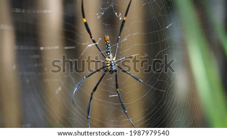Black and Yellow Spider on the Web Royalty-Free Stock Photo #1987979540