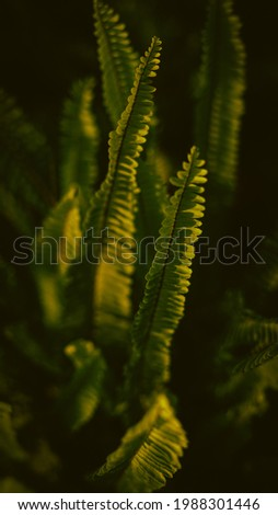 Green plant photography high definition for background purposes