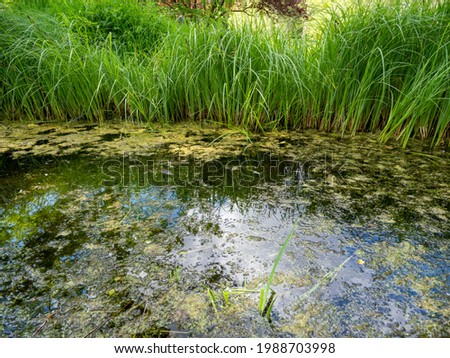 frog in a swamp by the water