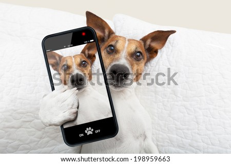 sleepyhead dog taking a selfie while in bed