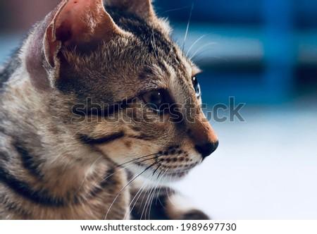 India, 24 May, 2021 : Closeup of cute kitten. Adorable kitten. Cat background. Beautiful cat.