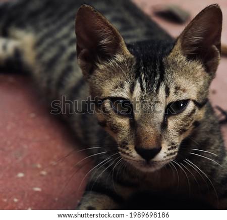 India, 28 May, 2021 : Closeup of cute kitten. Cat background. Adorable kitten. Beautiful cat.