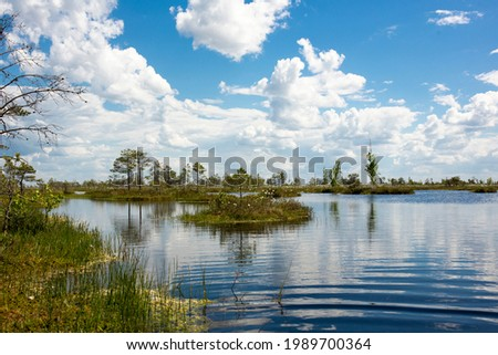 Swamps. Belarusian swamps are the lungs of Europe. Ecological reserve Yelnya. Royalty-Free Stock Photo #1989700364