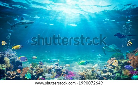 Underwater Diving  - Tropical Scene With Sea Life In The Reef  Royalty-Free Stock Photo #1990072649