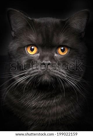 Portrait of black cat on black background