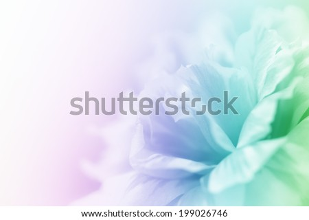 beautiful flowers made with color filters abstract #199026746