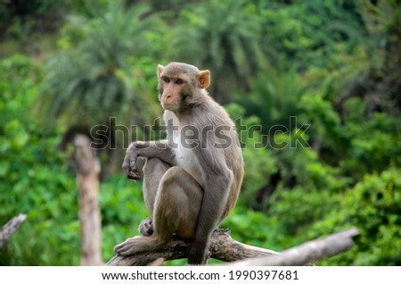 a perfect picture of a monkey sittiny on tree beautiful grey background