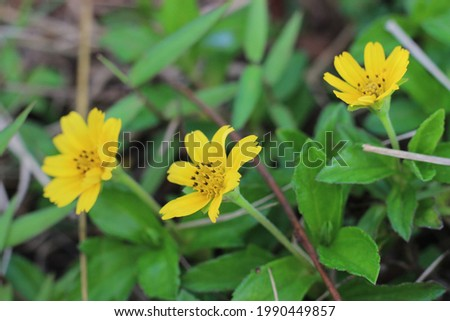 Beautiful yellow flowers with fresh green leaves  Royalty-Free Stock Photo #1990449857