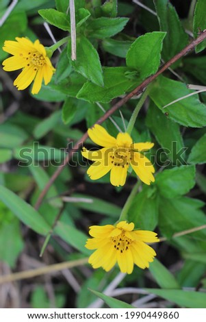 Beautiful yellow flowers with fresh green leaves  Royalty-Free Stock Photo #1990449860