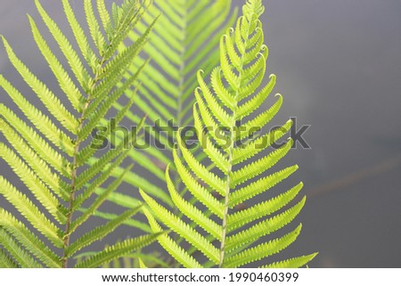 very beautiful green fern leaves  Royalty-Free Stock Photo #1990460399