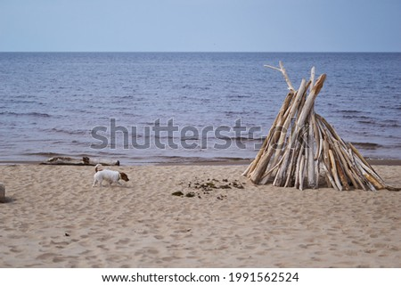 Dry twigs stick out of the sand on a wild beach on a warm day. The sand is covered with spots of light and shadow. A dog runs on the sand  Royalty-Free Stock Photo #1991562524