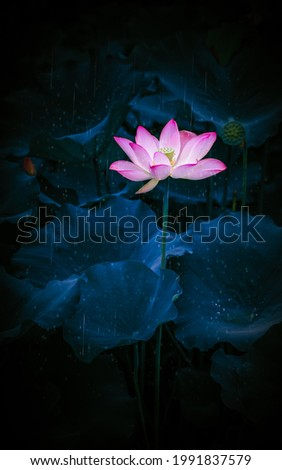Early in the summer, the lotus in the lotus pool is blooming in the rain, just like a Chinese Decorative pictures.