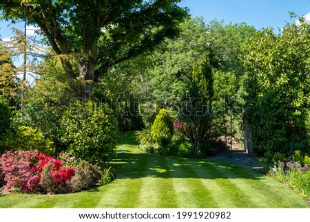 London UK. June 2021. Suburban, well stocked garden with neatly mown striped lawn, tall oak tree, colourful azalias and a wide variety of other trees, shrubs and flowers. Royalty-Free Stock Photo #1991920982