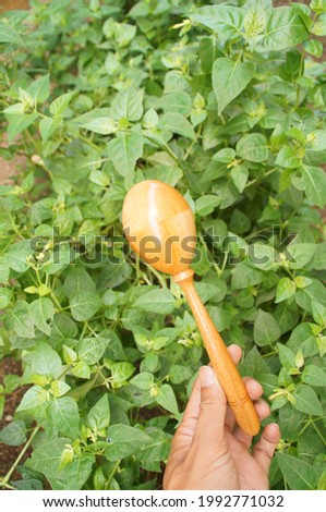 Maracas is a traditional musical instrument. When moved there is a sound like sand that can be accompanied by music with a sik sik sik sound.