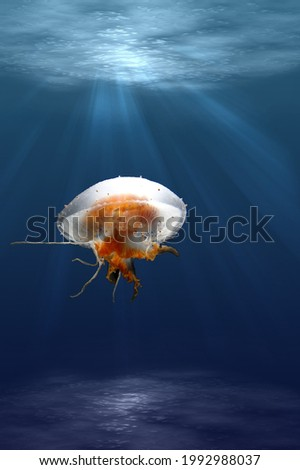 fantastic picture of a jellyfish underwater with rays of sunlight penetrating the water.