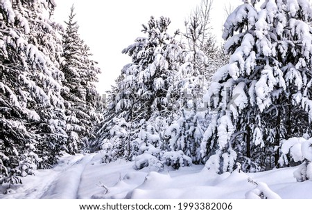 Snow covered fir trees in the winter forest. Winter snowy forest. Fir trees in snowy forest in winter Royalty-Free Stock Photo #1993382006