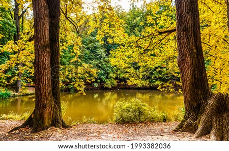 Tree trunks near a forest pond in autumn. Autumn forest pond trees. Trees at autumn forest pond Royalty-Free Stock Photo #1993382036