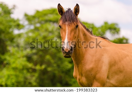 Animals in Wildlife and Horses
