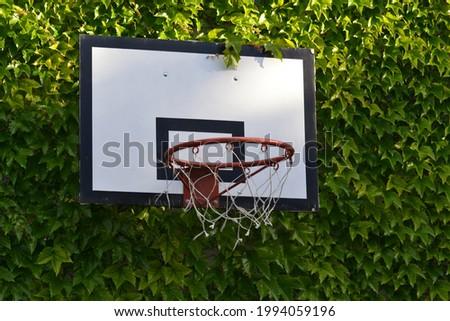Basketball board in the green ,in my yard