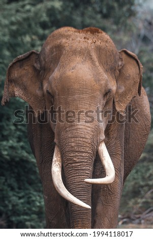 in search of srilanka vanishing tusker Royalty-Free Stock Photo #1994118017