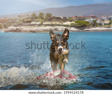 dog surfing on a wave
