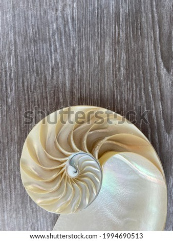 nautilus shell symmetry Fibonacci half cross section spiral golden ratio structure growth close up mother of pearl close up ( pompilius nautilus ) stock, photo, photograph, image, picture