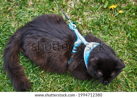 Close-up of a black cat sitting on the grass Royalty-Free Stock Photo #1994712380