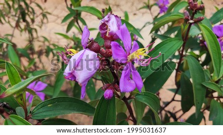 is a photo of a wild flower that lives in an arid land, purple in color with an acorn, a good macro picture.