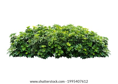 bush tree plant isolated include clipping path on white background Royalty-Free Stock Photo #1995407612